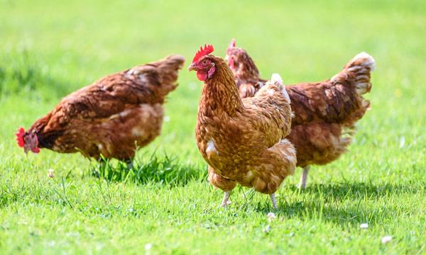 China: first case of bird flu